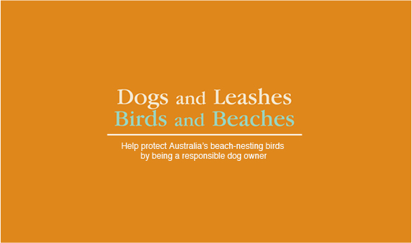 Dogs and leashes, birds and beaches