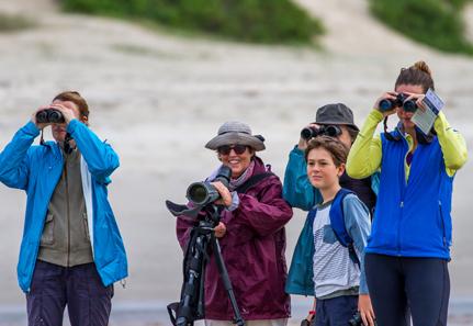 World Shorebirds Day