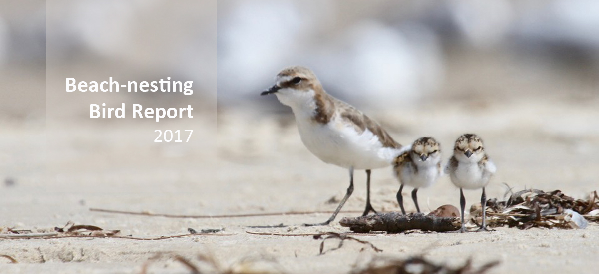 Beach-nesting Bird Report 2017