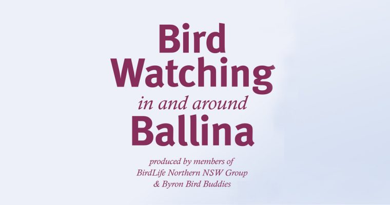 Bird Watching in and around Ballina